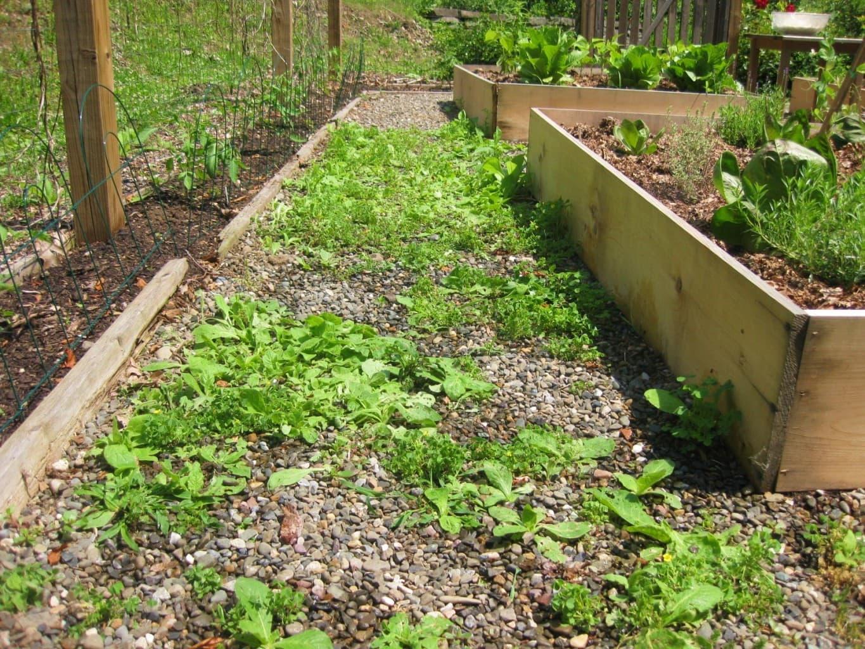 winterizing garden weeding